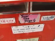 Dograffiti
