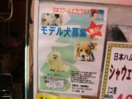 Dog model advertisement