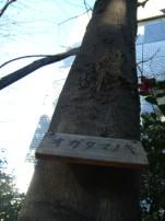 Tree sign