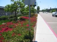 Terminal Sidewalk