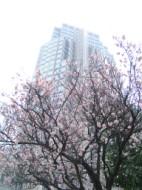 Plum Blossom Tocho